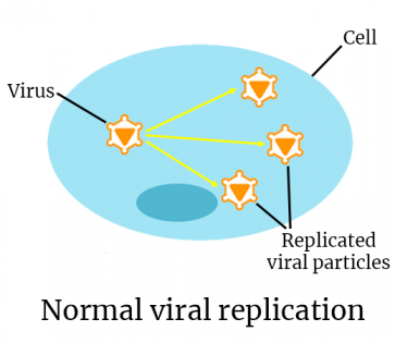 viral replication normal